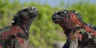 Wandern auf den Galapagos Inseln