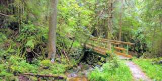 Wandern auf dem Schluchtensteig - Schwarzwald