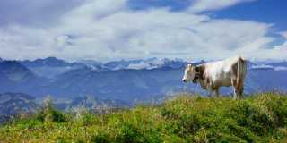 Allgäu: Geführte Wanderreise - Felslandschaft über grünen Almen