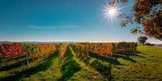 Esslingen - Geführte Wanderreise: Altstadt, Neckar und viel Wein