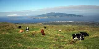 Azoren: Geführte Wanderreise zwischen Pottwalen und Hortensien – Pico & Terceira