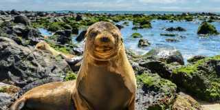 Galapagos: Geführte Wanderreise auf den Galapagos Inseln