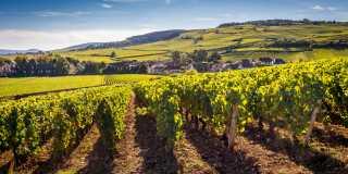 Wandern wie Gott in Frankreich im Burgund